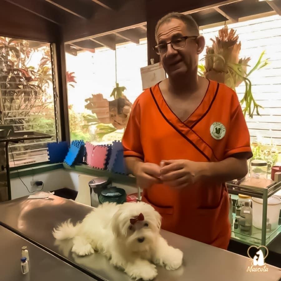 Servicios de Cirugía, estética y Ortopedia Perros y gatos