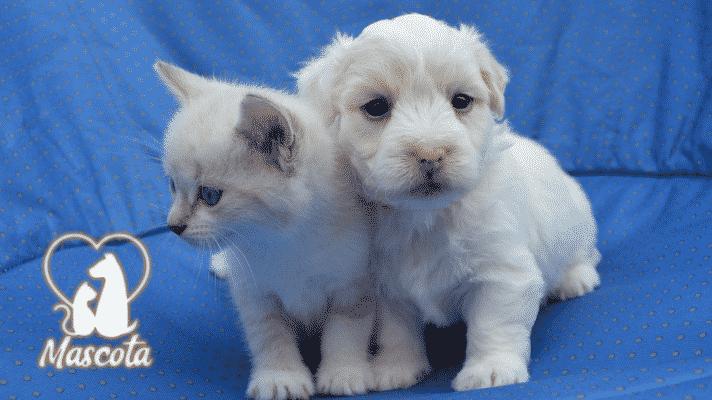 Consideraciones antes de conseguir una mascota