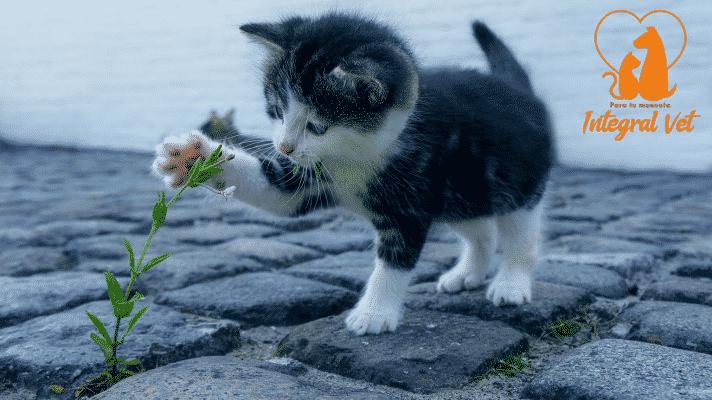 Quiero un gato: ¿Qué debo saber?